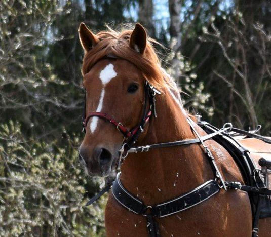 hevosen-hyvinvointi
